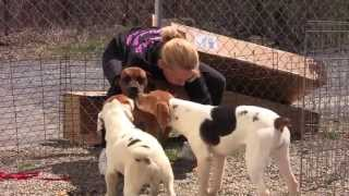 Download Free to Be Me - Puppy Mill Rescue Dogs Now Thriving! Video
