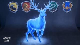 Download 3D Chalk Art - Harry Potter's Patronus Video