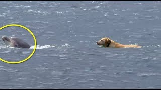 Download This Dog Kept Swimming Out Into The Ocean. Then His Owner Realized The Astonishing Reason Why Video