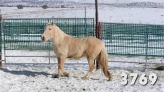 Download Oregon Wild Horse Adoption, January 2017 Video
