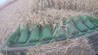 Download Harvesting ″downed″ corn in the snow Video
