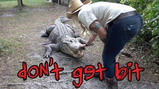 Download Why You Shouldn't Mess With Alligators Video