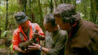 Download Last Chance To See - The Kiwi - BBC Two Video