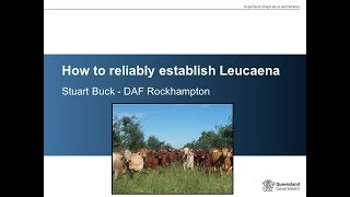 Download How to reliably establish leuceana. Video