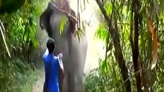 Download Charging Elephant STOPPED With A Wave - Face To Face Encounter With An Elephant!!! Video