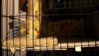Download Hungry,hungry feral kittens Video