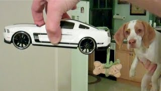 Download Dog Takes Toy Car for Spin: Cute Dog Maymo Video