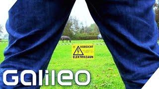 Download Finde den Lügner - Pinkeln gegen den Elektrozaun | Galileo | ProSieben Video