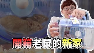 Download 【維鼠日記】開箱老鼠的新家【維特】#06 |Unboxing the new home of the baby rats Video