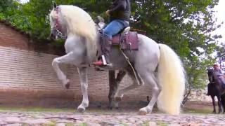 Download ALGUNOS CABALLOS DE RANCHO EL AGUAJE Video