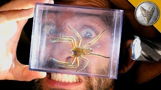 Download World's MOST DANGEROUS Animal Catches! Video