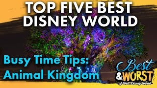 Download TOP 5 BEST Busy Time Tips & Tricks: Animal Kingdom! | Best & Worst | 12/21/16 Video