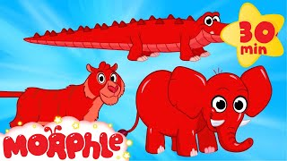 Download Cute Scary Animal Videos With Morphle - Tiger, Crocodile, Elephant Video