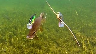 Download Pike attack Mike & Ricky fishing lures. Hechtangeln. Gäddfiske. Pesca del lucio Рыбалка щука атакует Video