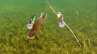 Download Pike attack Mike & Ricky fishing lures. Gäddfiske. Рыбалка щука атакует рыболовные приманки Video