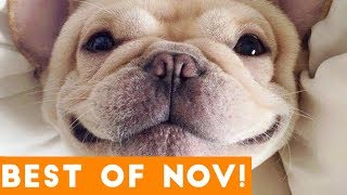 Download Funniest Pet Reactions & Bloopers of November 2017 | Funny Pet Videos Video