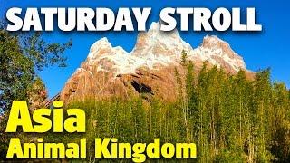 Download Saturday Stroll around Asia | Animal Kingdom Video