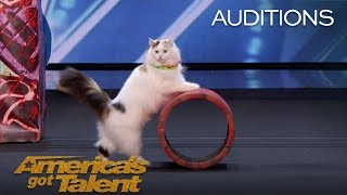 Download The Savitsky Cats: Super Trained Cats Perform Exciting Routine - America's Got Talent 2018 Video