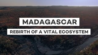 Download Reforestation in Madagascar: Rebirth of a vital ecosystem Video