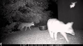 Download Arizona Trail Cam - Name that Animal Video