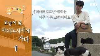 Download 고양이를 부탁해 - 고양이섬, 아이노시마에 가다 #001 Video