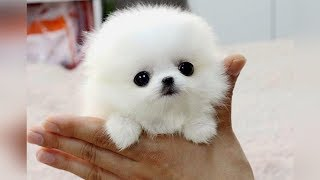 Download The SMALLEST DOG BREEDS in the World Video