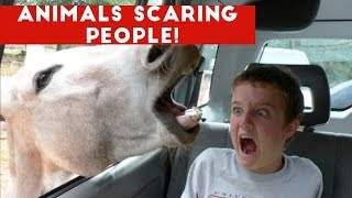 Download Funniest Animals Scaring People Reactions of 2018 Weekly Compilation | Funny Pet Videos Video