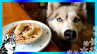 Download DIY TREATS PEANUT BUTTER PIE FOR DOGS | Snow Dogs Snacks 55 | DIY Dog Treats Birthday Pie Video