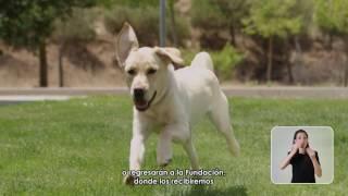Download ONCE - Fundación ONCE del Perro Guía (FOPG) Video