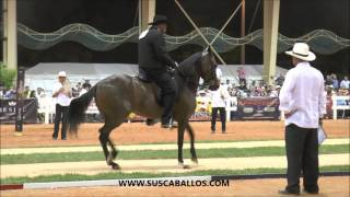 Download Gran Campeonato Yeguas De Paso Fino, Spectrum Internacional 2016 Video