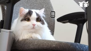 Download 겁쟁이 고양이가 무서울 때 최대한 도망치는 법! Video