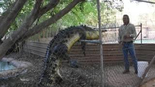 Download Malcolm Douglas Crocodile Park, Broome, Western Australia Video