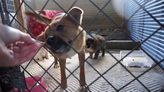 Download 保護母犬 テレサ と 子犬 フランとシスコ お母さんおやつ食べたいよ Video
