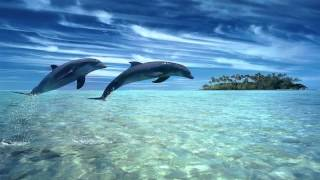 Download ♫ Dolphin dreams ♫ Melody oceans ♫ Zen and Relaxation ♫ Video
