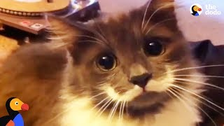 Download Hipster Cat Has The COOLEST Mustache | The Dodo Video