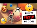 Download Fruits Toxic to Dogs Video