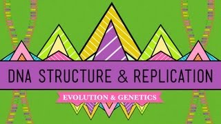 Download DNA Structure and Replication: Crash Course Biology #10 Video