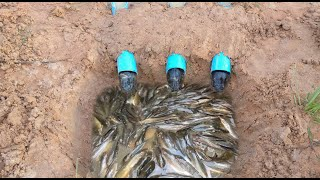 Download Water Pipe Deep Hole Fish Trap To Catch A Lot Of Fish By A Smart Girl Video