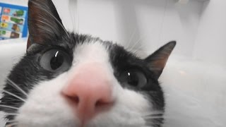 Download 【猫風呂】猫をハンズフリーで撮影する方法 - How to shoot a Moo's bating video with my hands free.[Cat Bath] Video