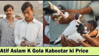 Guru Mandir Kabootar Market - Pigeons in Pakistan Free Download