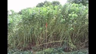 Download Couvrir les sols, même en bio. J-C Bady Video