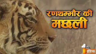 Download Queen of the Jungle | Ranthambore's Machhali | Wildlife history of India | Story of T-16 Video