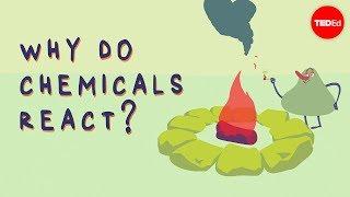 Download What triggers a chemical reaction? - Kareem Jarrah Video