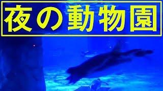 Download 【夜の動物園】ペンギンの食事風景♪ Night of the Zoo Video