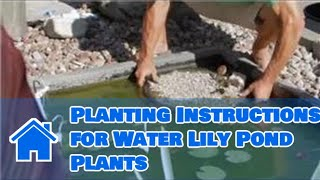 Download Care of Lilies : Planting Instructions for Water Lily Pond Plants Video