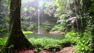 Download Rain Sound and Rainforest Animals Sound - Relaxing Sleep Video