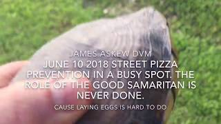Download JUNE 10 2018 STREET PIZZA PREVENTION IN A BUSY SPOT. THE ROLE OF THE GOOD SAMARITAN IS NEVER DONE. Video