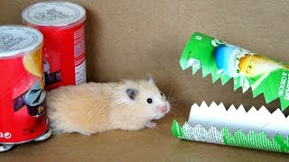 Download Hamster Pringles Obstacle Course Video