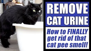 Download How To Remove Cat Urine Smell FINALLY! Video