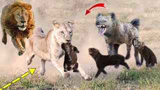 Download The Power Of King Lion! 4 Lions destroy mother and Hyena cubs within 1 second Video
